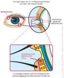 Lipo Nit Eye Doctor Augen-Wärme-Maske
